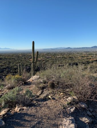 Sonora Desert near Tucson, AZ