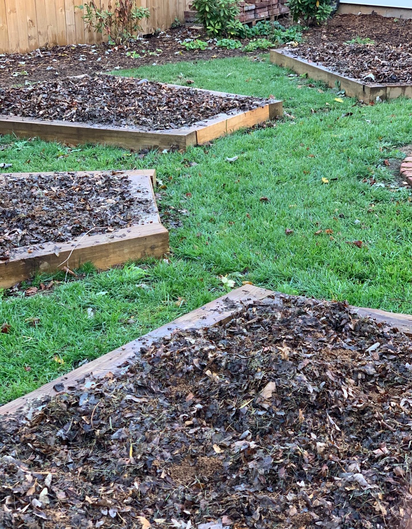 Raised beds mulched with shredded leaves