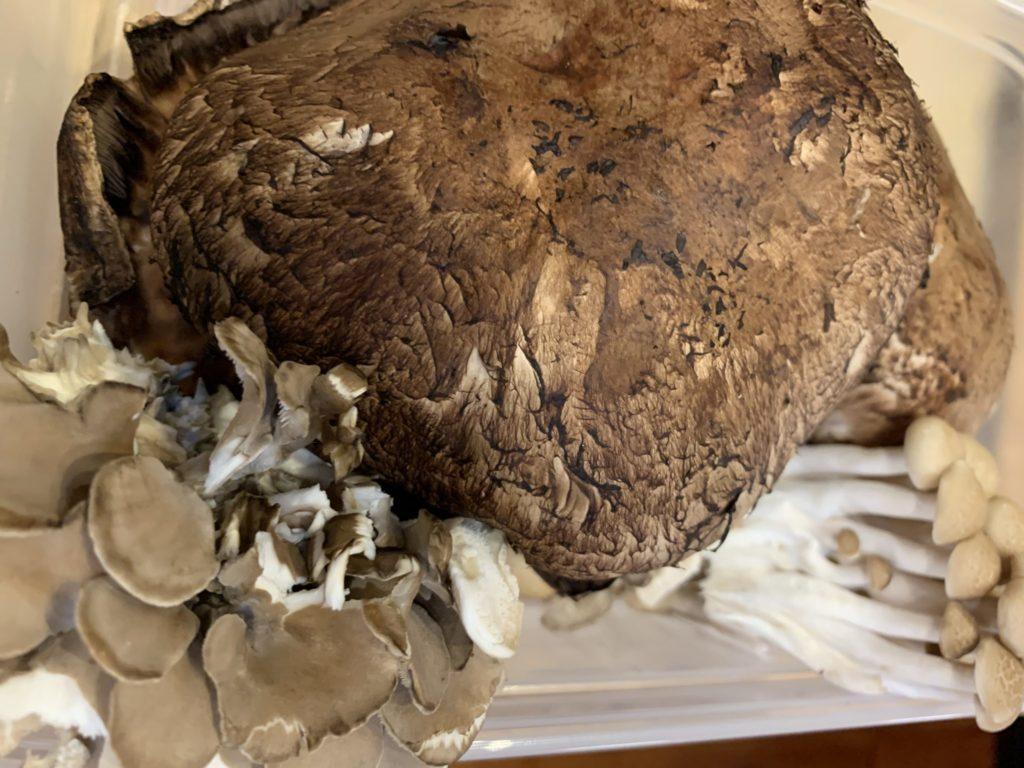 Portobello mushroom cap next to assorted other wild mushrooms